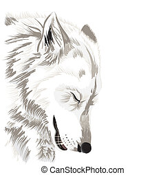 Wolf's face - Sketch of a wolf's face,on white background