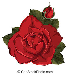 Vector red rose isolated
