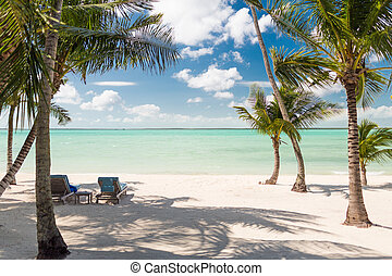 tropical beach with palm trees - beach, nature, sea, summer...