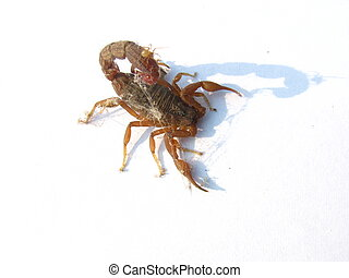 scorpion - scarpion entangled in dust and spider waves...