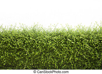 Bushes fence leaves green White plaster walls