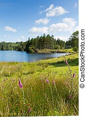 Tarn Hows Lake District National Pa