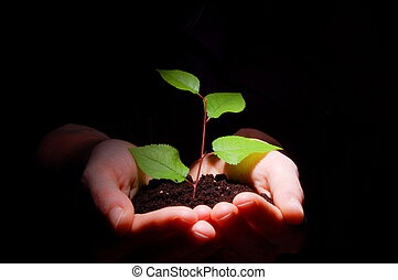 hands soil and plant showing growth