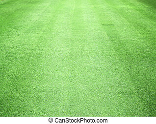 Green lawn grass natural pattern abstract background.