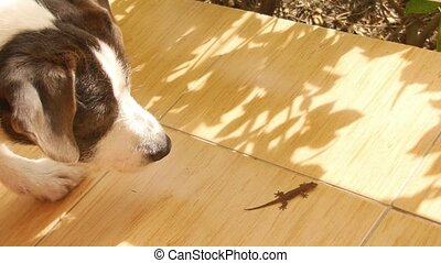 Funny Dog Hunting on Little Gecko Outdoors Thailand