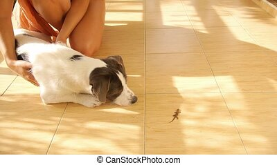 Cute Dog Looking at Little Gecko Outdoors