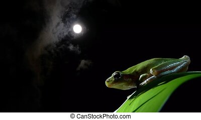 Southern Frog with timelapse - Southern frog moon timelapse...