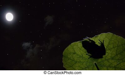 timelapse tree frog moon and stars with passing clouds.
