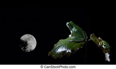 tree frog with full moon - tree frog with black background...