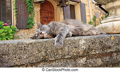 Provence  - A cat sleeping in Provence village