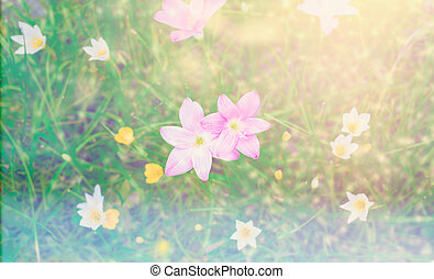 pink rain lilly blossom flower with sunflare