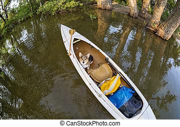 Corgi dog in canoe