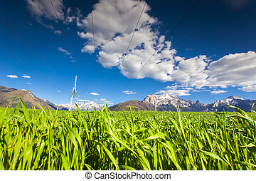 Electric wind turbines in the field of winter wheat in the...