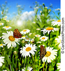 Summer landscape. Wild daisy flowers on blue sky background.