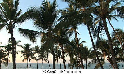 Palm Trees - Tropical palm trees against the sky and the...