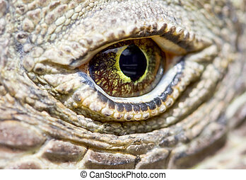 Komodo dragon eye - Extreme close up of a Komodo dragon eye...