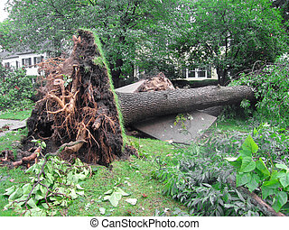 Uprooted Tree from a Storm - Damage to a tree and sidewalk...