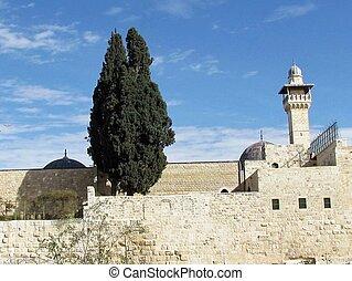 al-aqsa, ciprés, jerusalén, mezquita,  2012