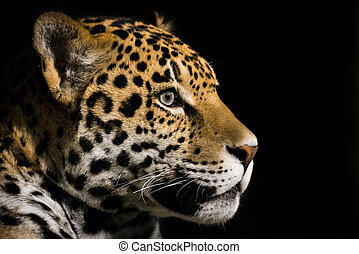 Jaguar III - Profile Portrait of Jaguar