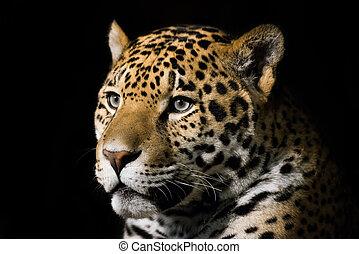 Jaguar - 3/4 Portrait of Jaguar