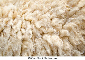 Sheep wool skin - Close up of sheep wool skin background