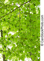 Green leaves background with backlight