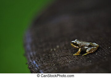 Young frog on a piece of wood