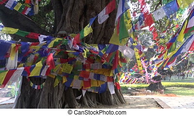 tree with colorful buddhist flags