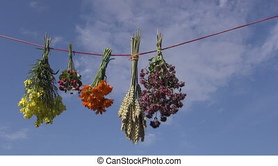various medical herbs bunches on clothes string and sky...