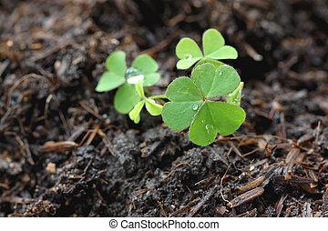 Green seedlings. - Green Seedlings in a macro.