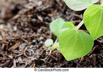 Leaf of seedlings. - Leaf of seedlings in a macro.
