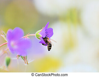 Bee on flower 2 - Honey Bee sitting on a purple flower