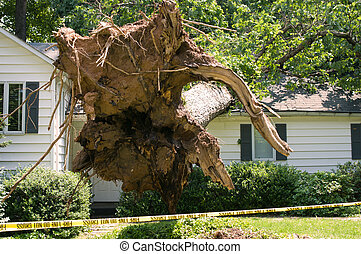 Tree house damage - Uprooted tree fell on a house after a...