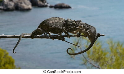 male and female common chameleon on the branch with sea...