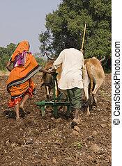 rural, vida,  Índia