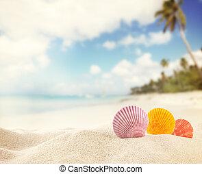 sommer, sandstrand, hintergrund