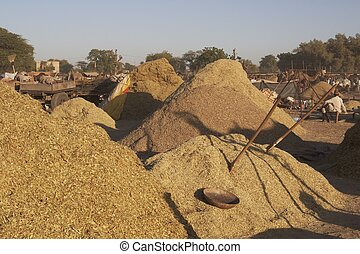 Camel Fodder - Piles of freshly ground camel fodder for sale...