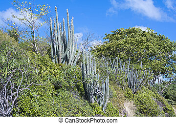Subtropical vegetation - Typical subtropical vegetation...