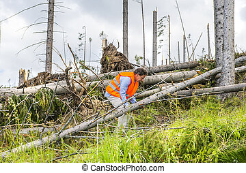 Forest disaster - Rescue worker at destroyed forest as an...