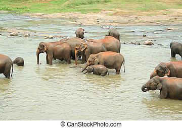 Éléphant, famille, eau