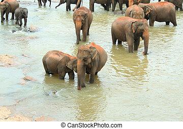 Éléphants, eau