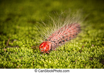 Red head worm on the green grass