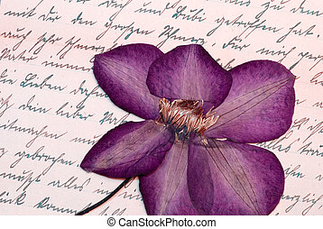 Pressed clematis flower - pressed clematis flower on old...