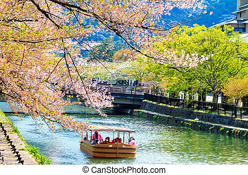 Sakura season in Kyoto, Japan - Kyoto, Japan - April 12,...