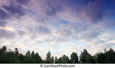 clouds behind the trees in the forest. Moiseevichi,...