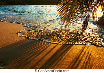 Beautiful sunset at Seychelles beach with palm tree shadow...