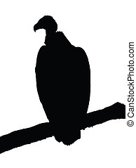 Portrait Silhouette of Large Vulture on Branch - Detailed...