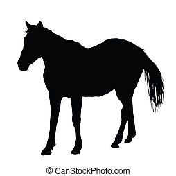 Portrait Silhouette of Large Horse Standing