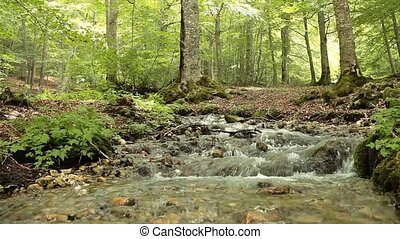 Small Waterfall - Video of small waterfall situated in the...