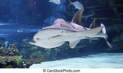 shark swimming underwater marine life